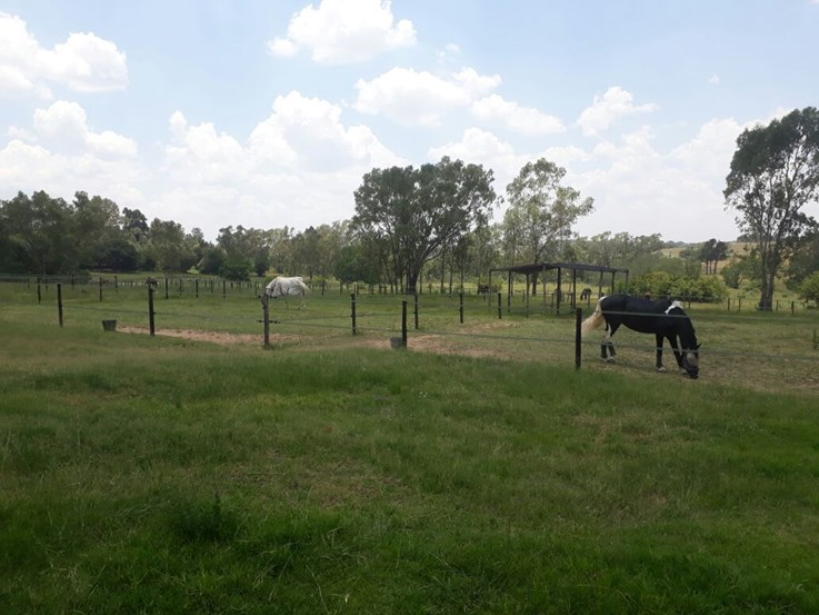Equestrian Estate on Onsite Auction