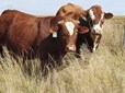 OCTOBER LIVESTOCK ONLINE AUCTION