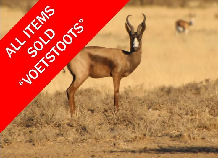 WILDLIFE ONLINE AUCTION