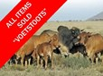 NOVEMBER LIVESTOCK AND WILDLIFE ONLINE AUCTION