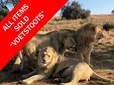 AUGUST WILDLIFE ONLINE AUCTION